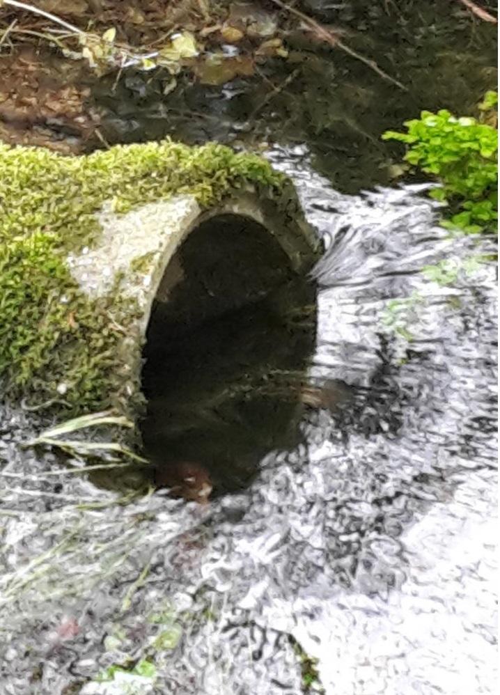 Le chenal de la source coule