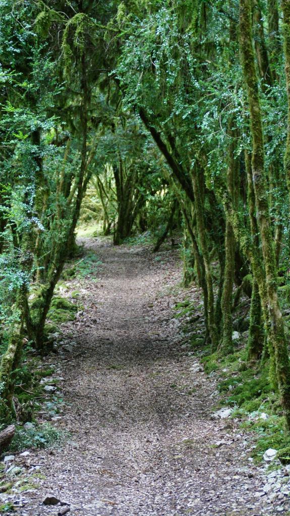 Chemin des Buis