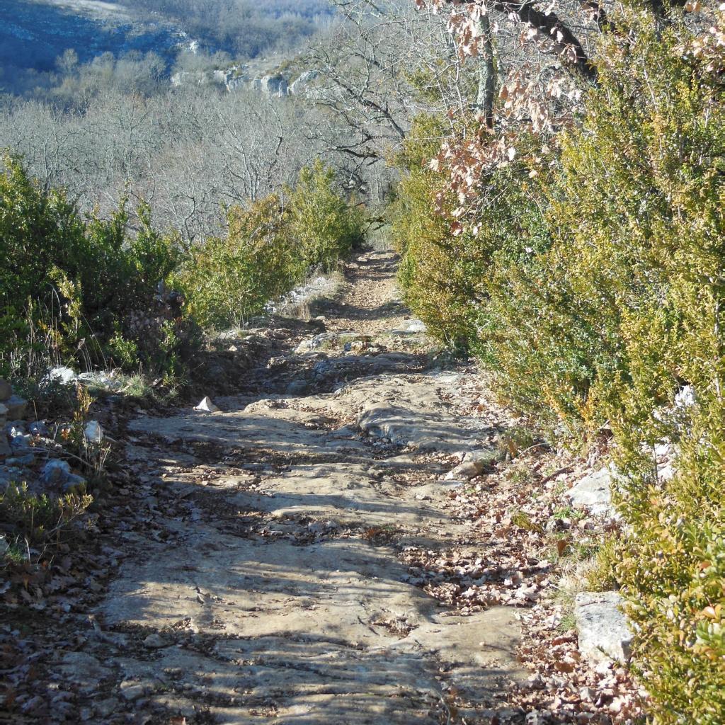 Chemin (Direction Saint Symphorien)